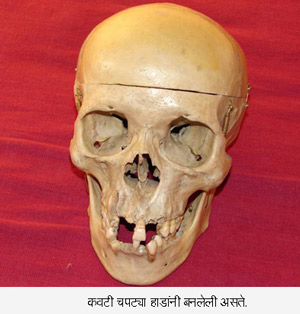skull burst